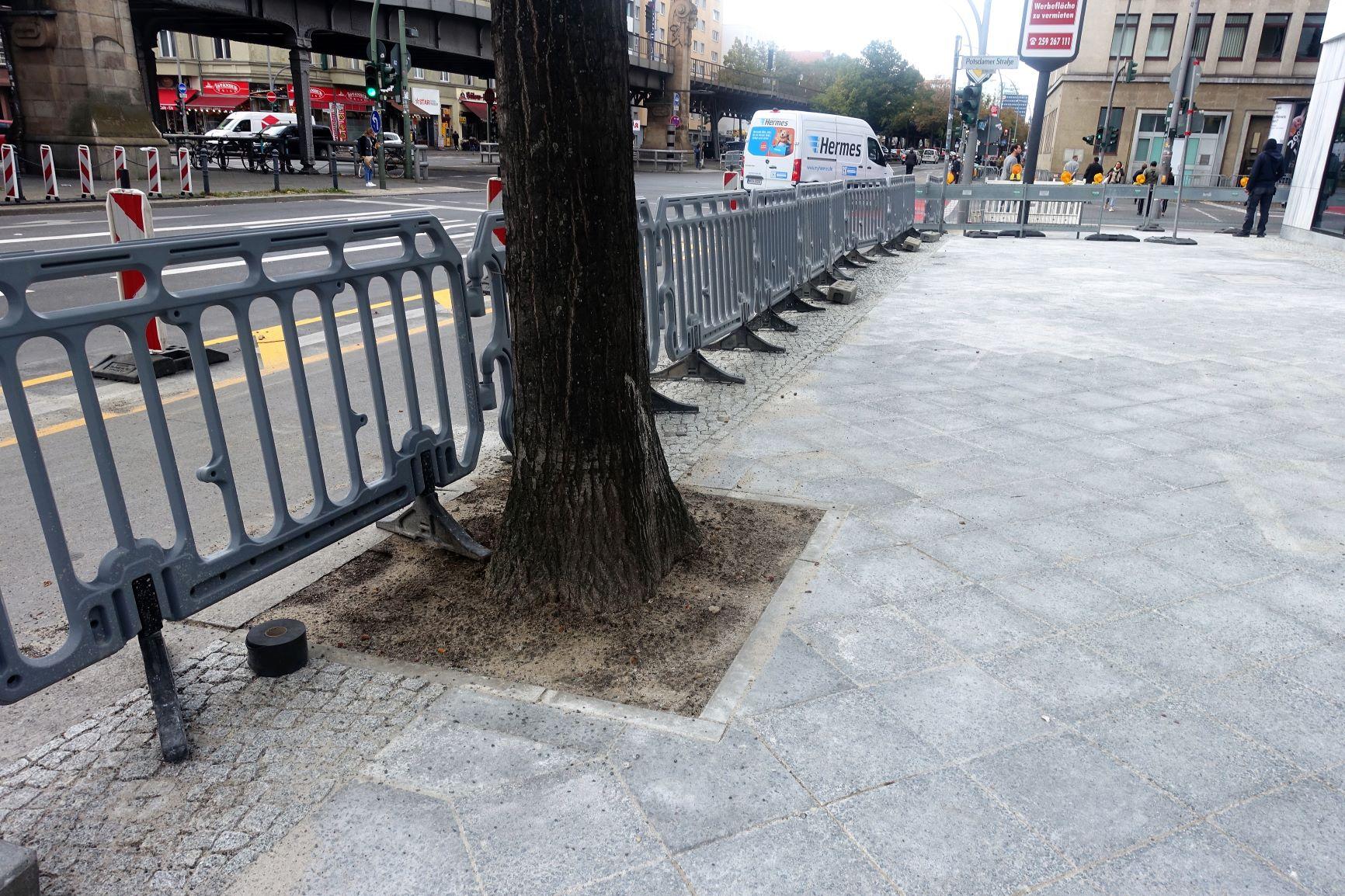 Neue Gehweggestaltung  gefährdet die Eichen in der Bülowstraße